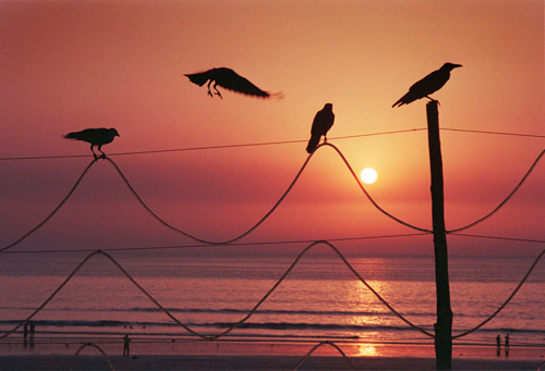 Sun and Sea Mumbai