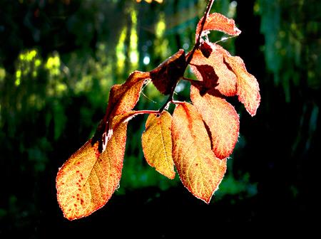 Garden light on leaves at dusk