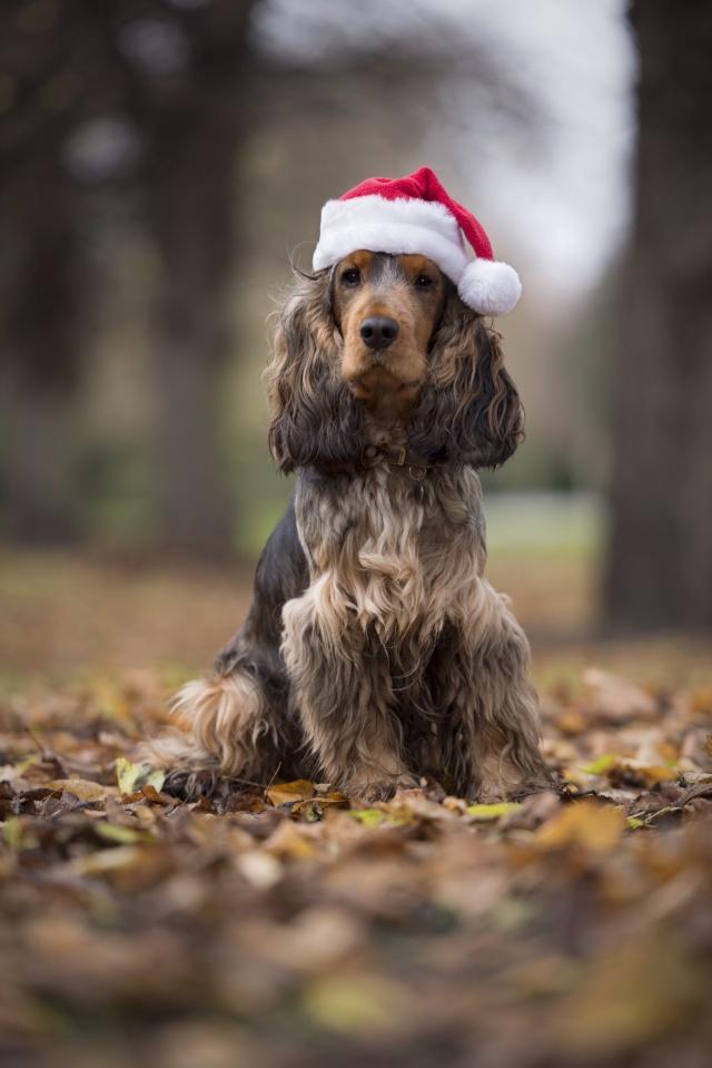 Biggles' First Christmas